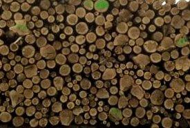 biomass logs